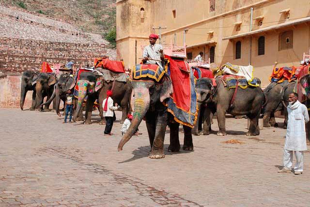 Jaipur - elefantes